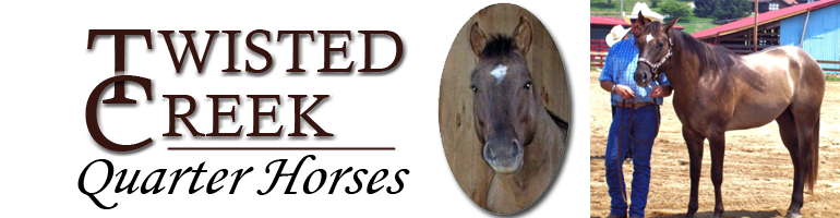 twisted creek quarter horses for sale franklin nc north carolina